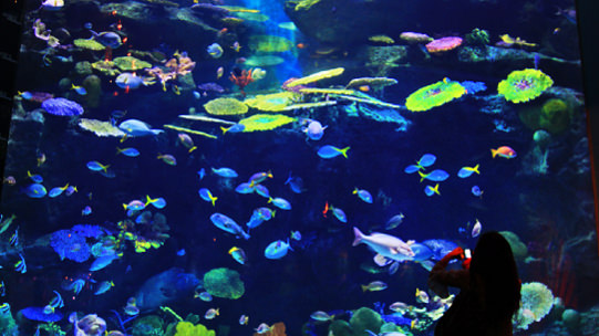 SEA LIFE Bangkok Ocean World